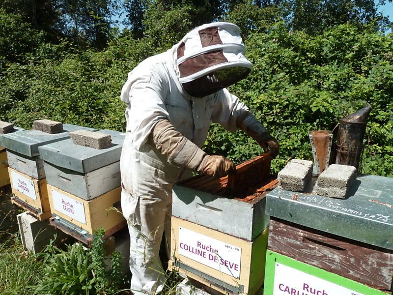 La ruche Colline de sève