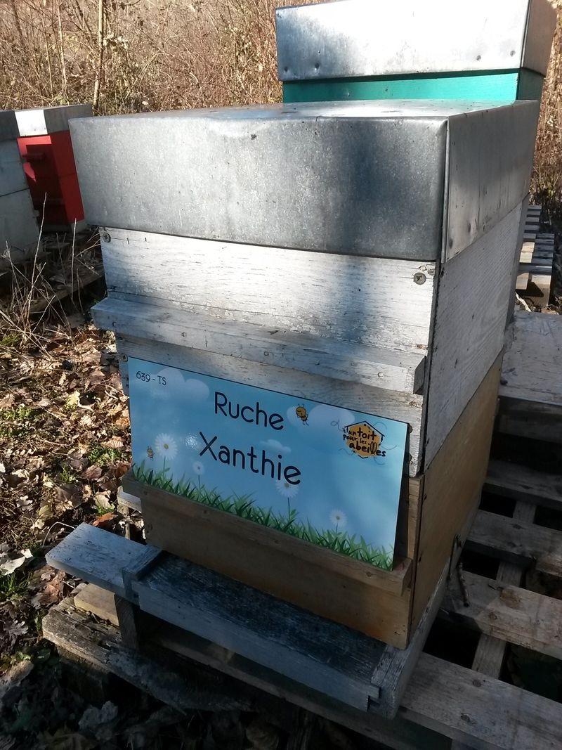 La ruche Xanthie