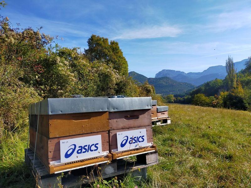 La ruche ASICS France