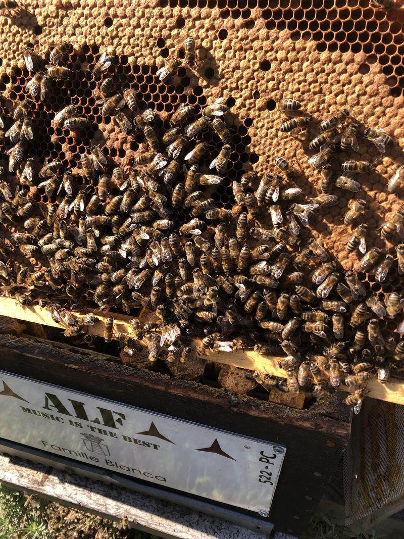 La ruche Famille BLANCA