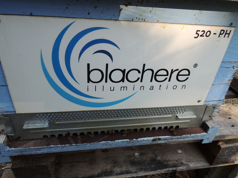 La ruche BLACHERE ILLUMINATION