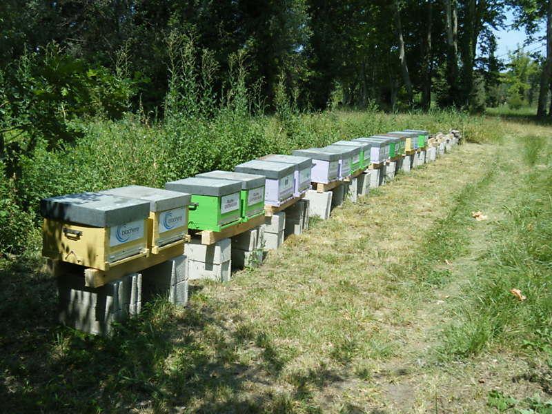 La ruche BLACHERE ILLUMINATION