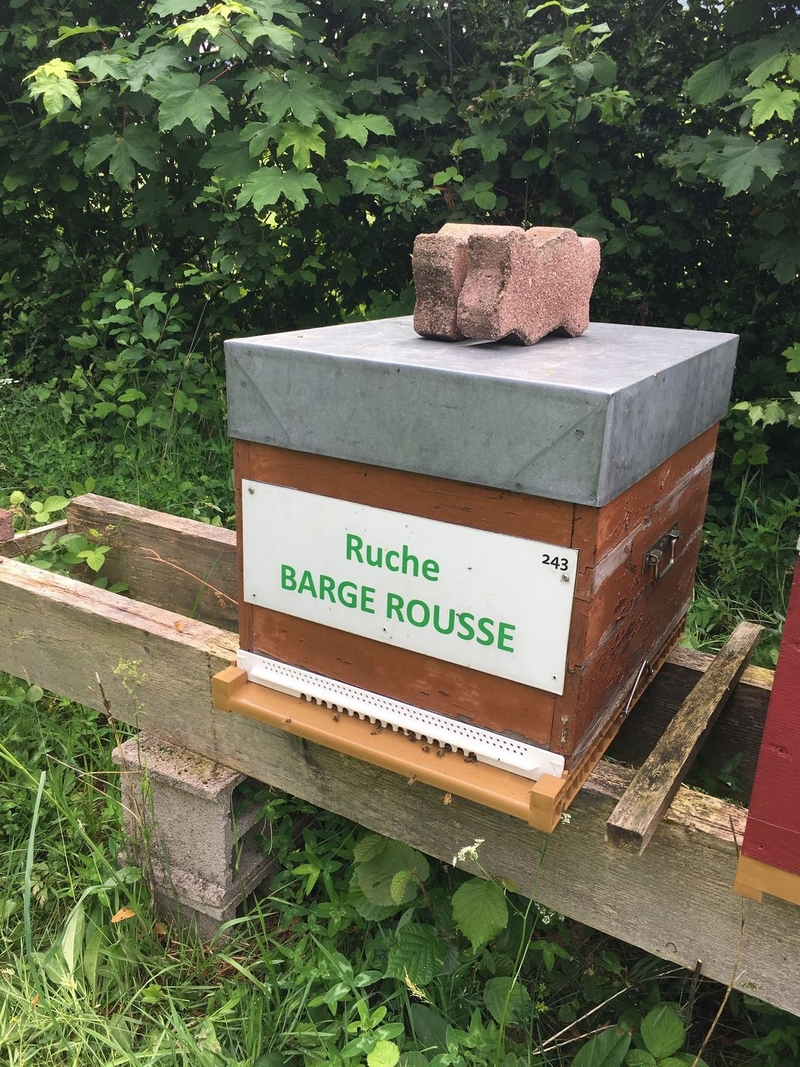 La ruche Barge rousse