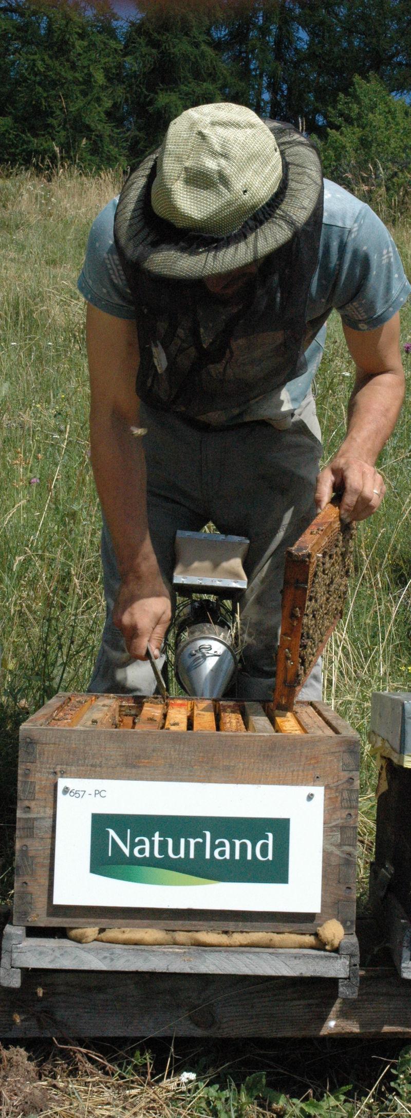 La ruche NATURLAND