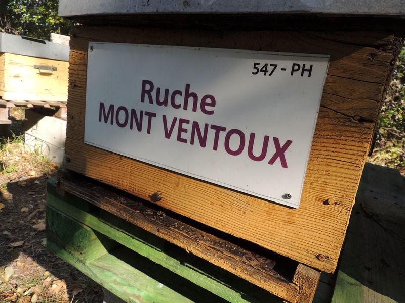 La ruche Mont ventoux