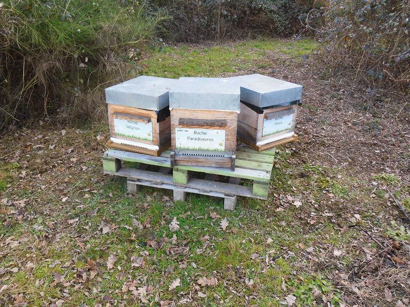 La ruche Satyrion