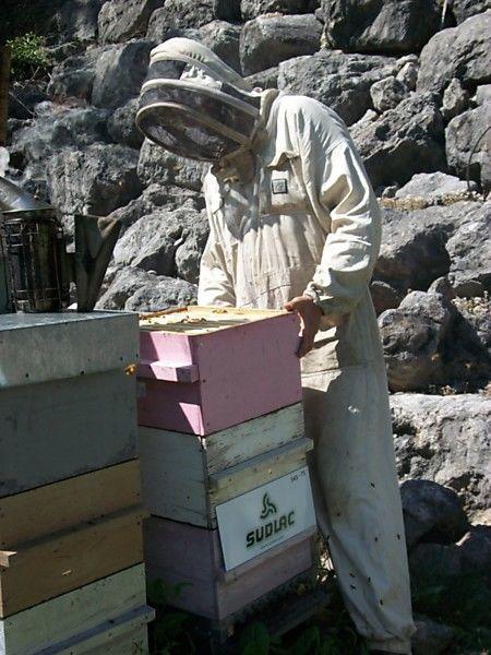 La ruche SUDLAC