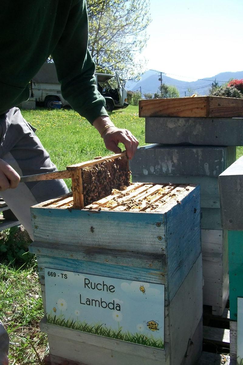 La ruche Lambda