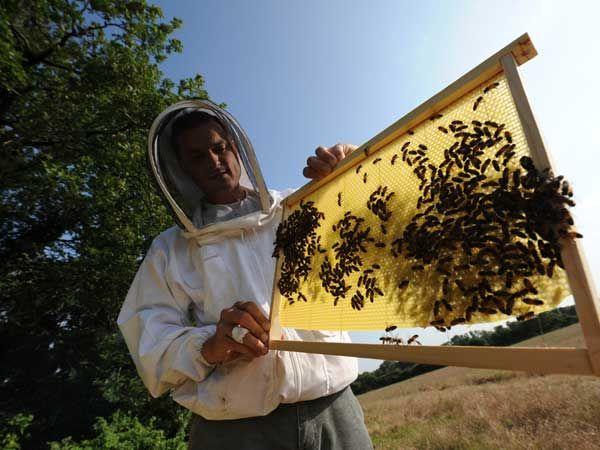 La ruche Chevalier