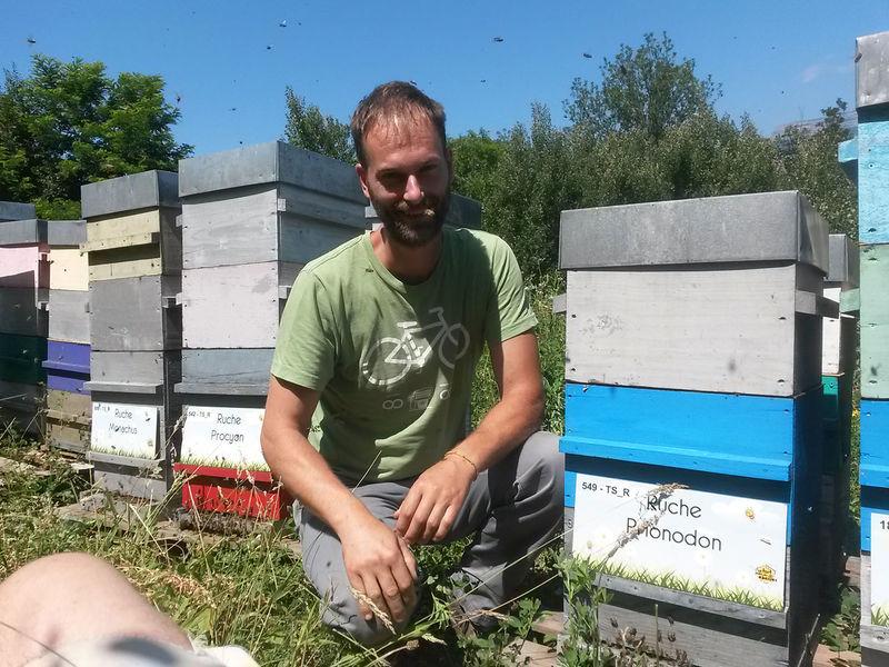La ruche Prionodon