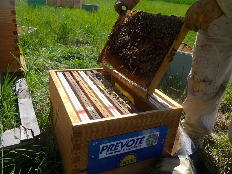 La ruche Astre Prévoté transport et logistique