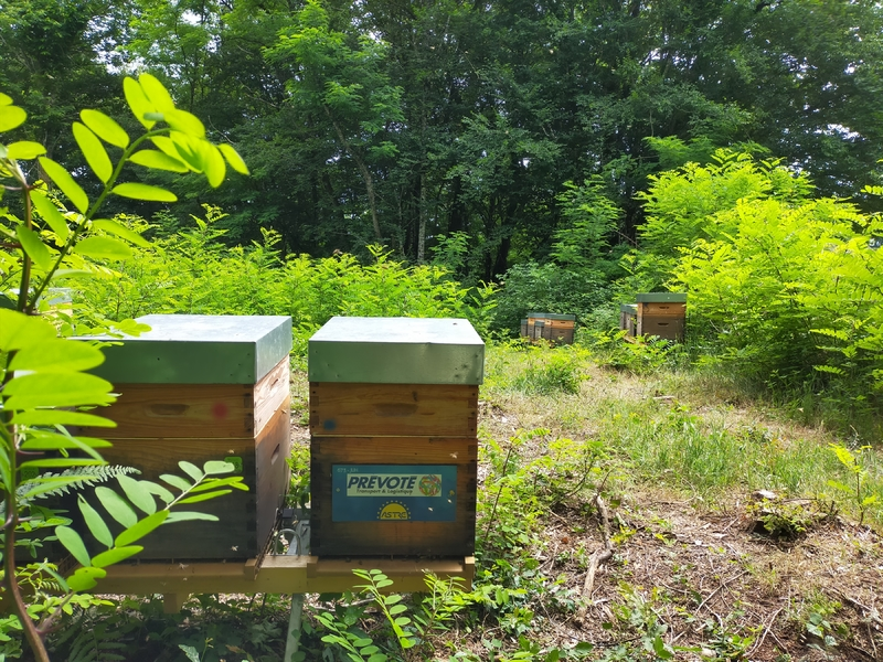 La ruche Prevote transport et logistique