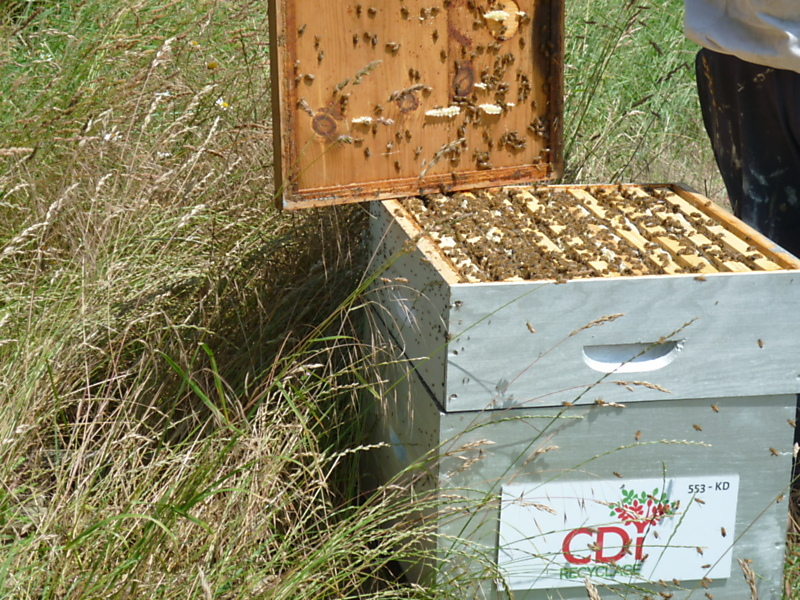 La ruche PAPREC GROUP