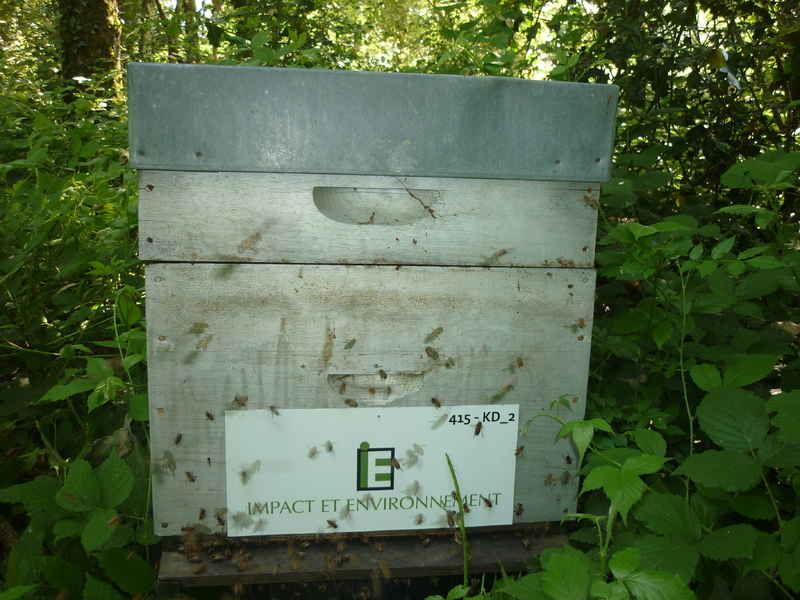 La ruche IMPACT ET ENVIRONNEMENT