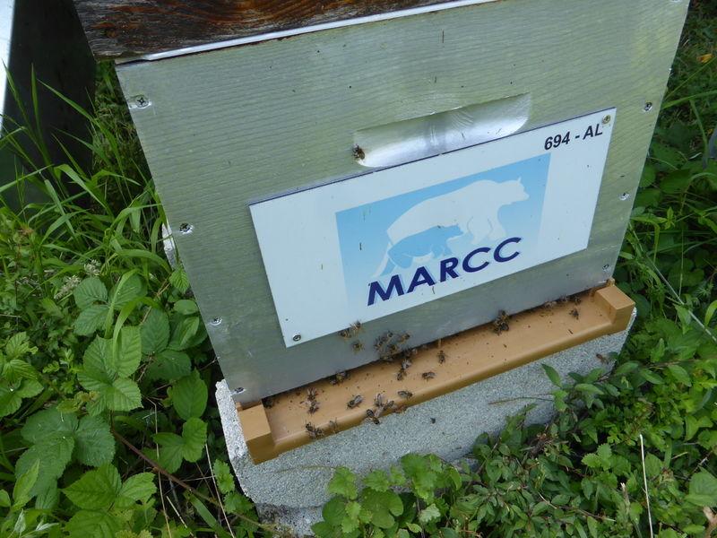 La ruche MARCC