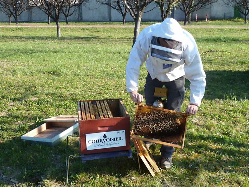 La ruche Courvoisier