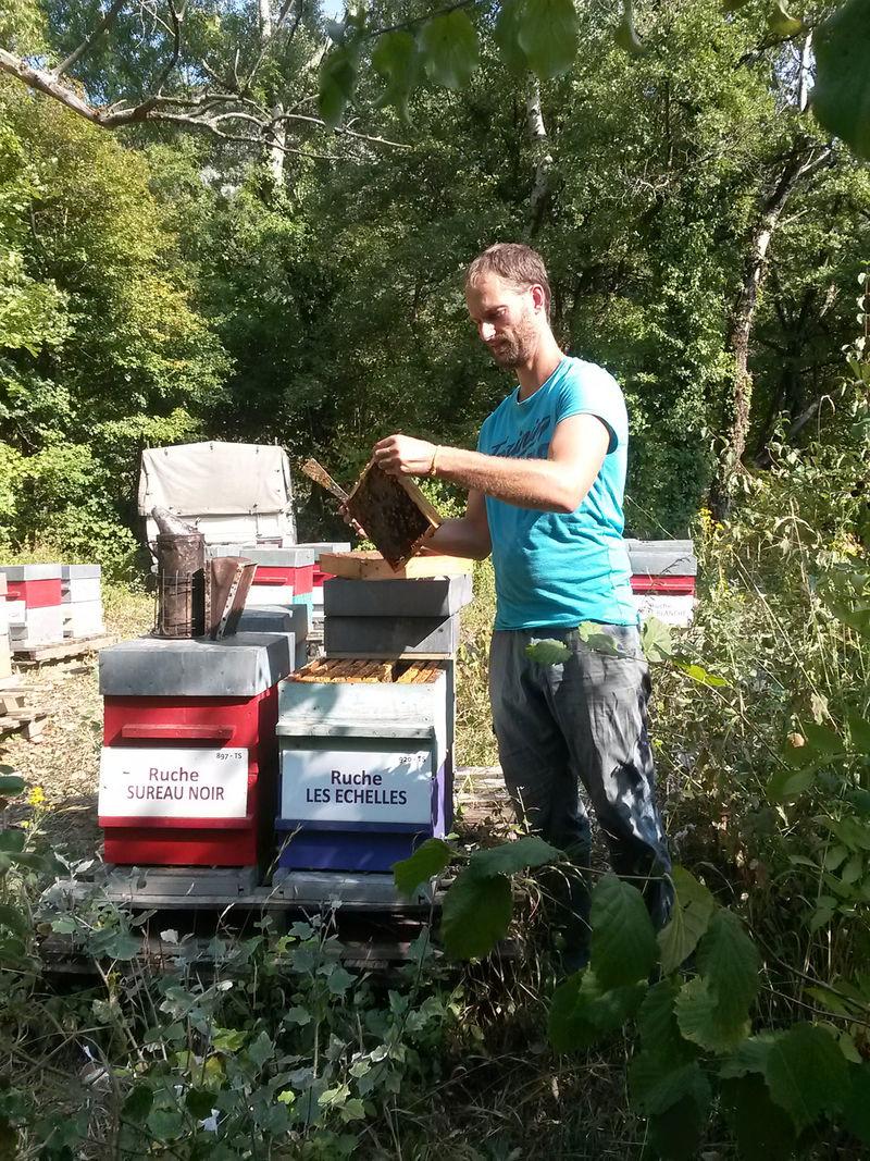 La ruche Les échelles