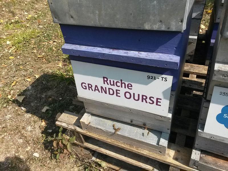 La ruche Grande Ourse