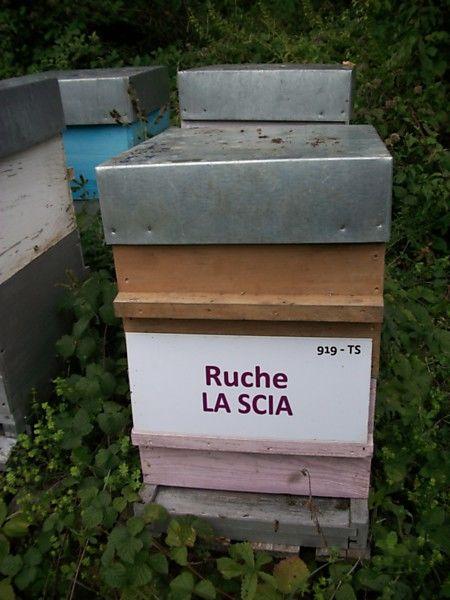 La ruche La scia