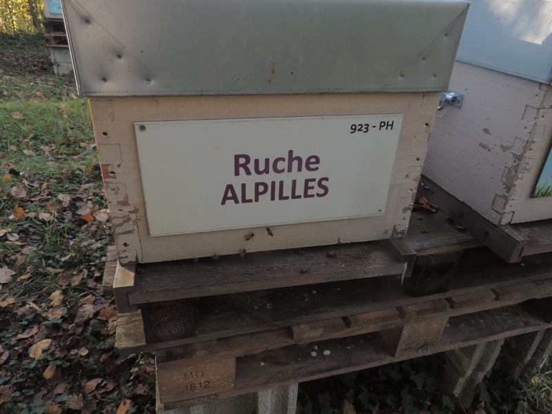 La ruche Alpilles