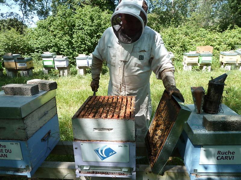 La ruche J CAUSSE ET ASSOCIES