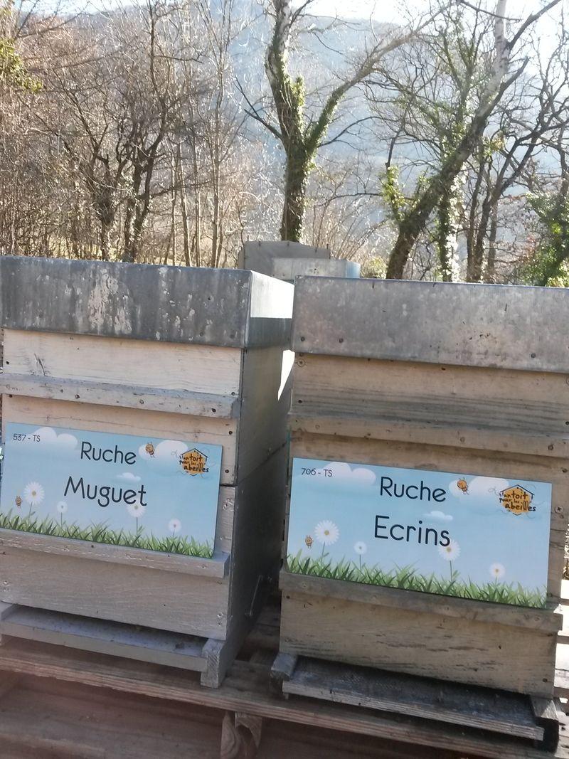 La ruche Ecrins