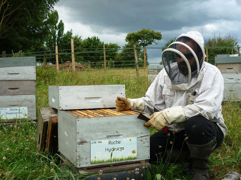 La ruche Hydrurga