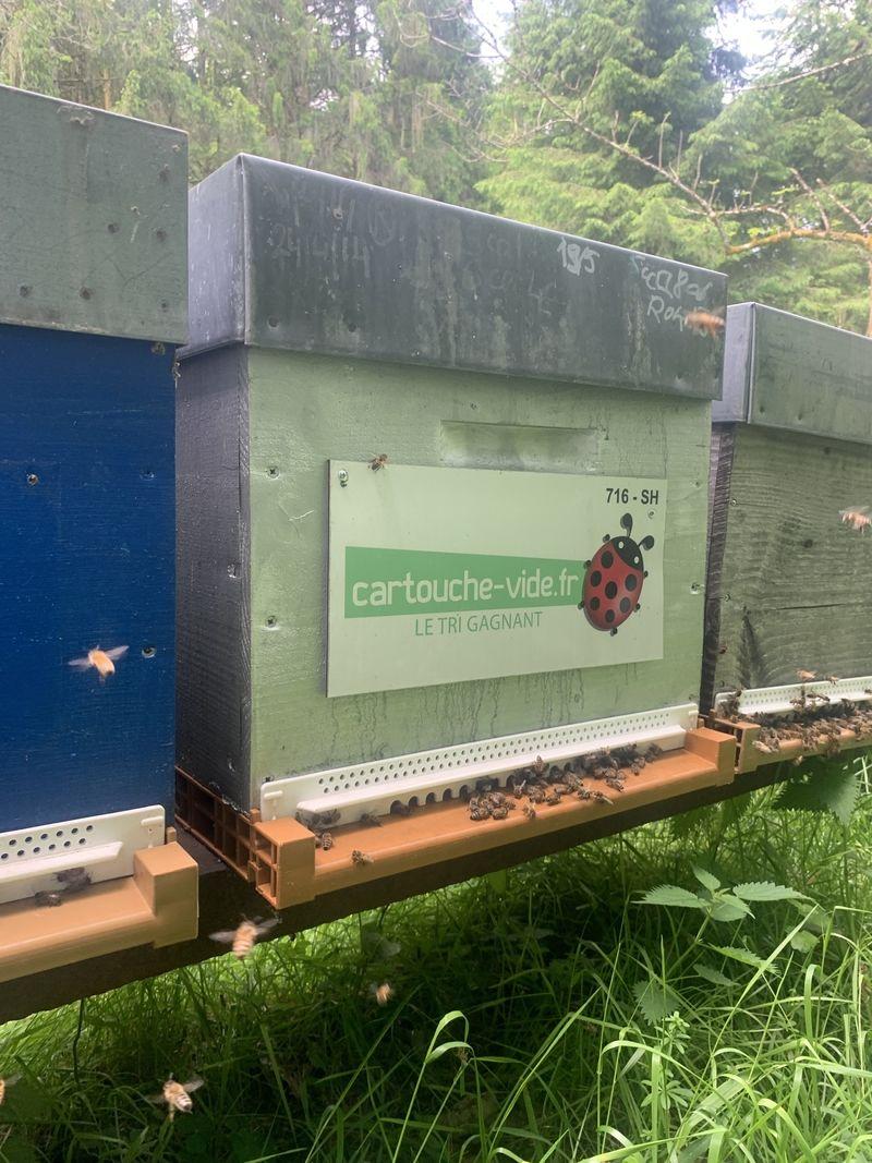 La ruche CARTOUCHE VIDE