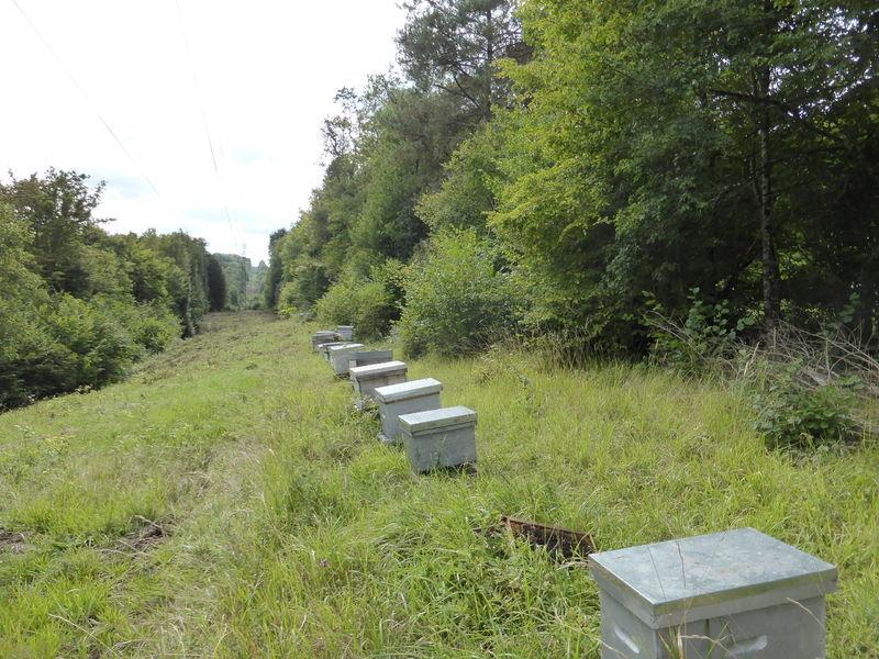 La ruche Iding