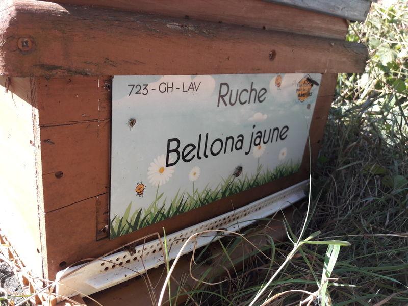 La ruche Bellona jaune