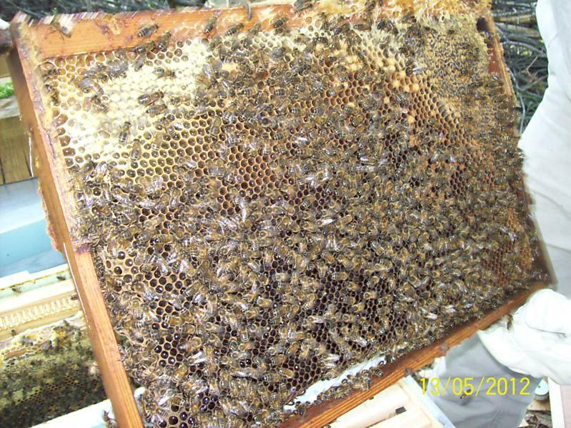 La ruche Carina rose