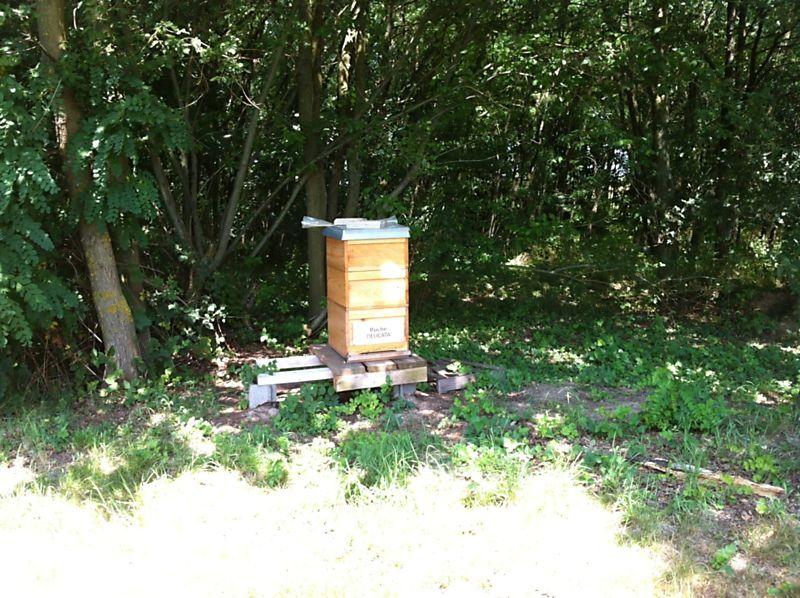 La ruche Délicata