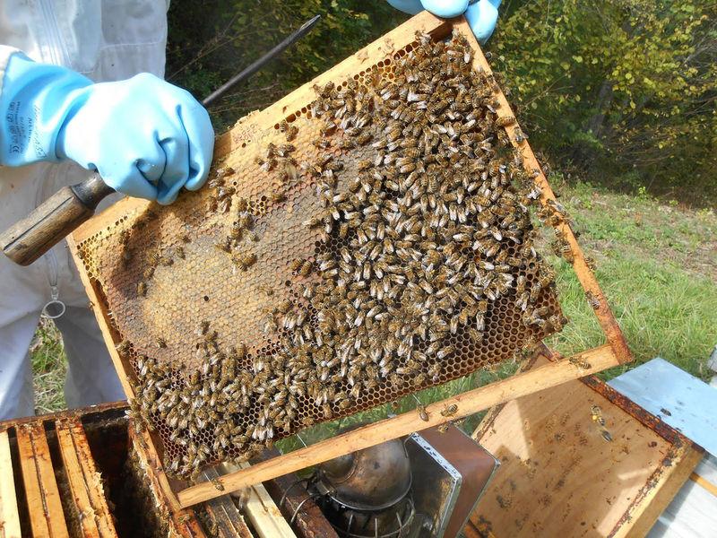 La ruche Calixir