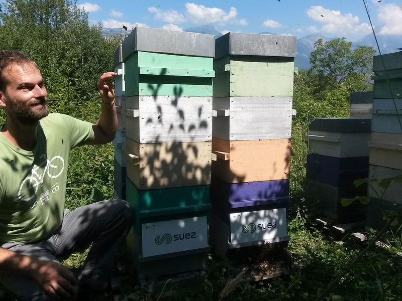 La ruche Suez organique