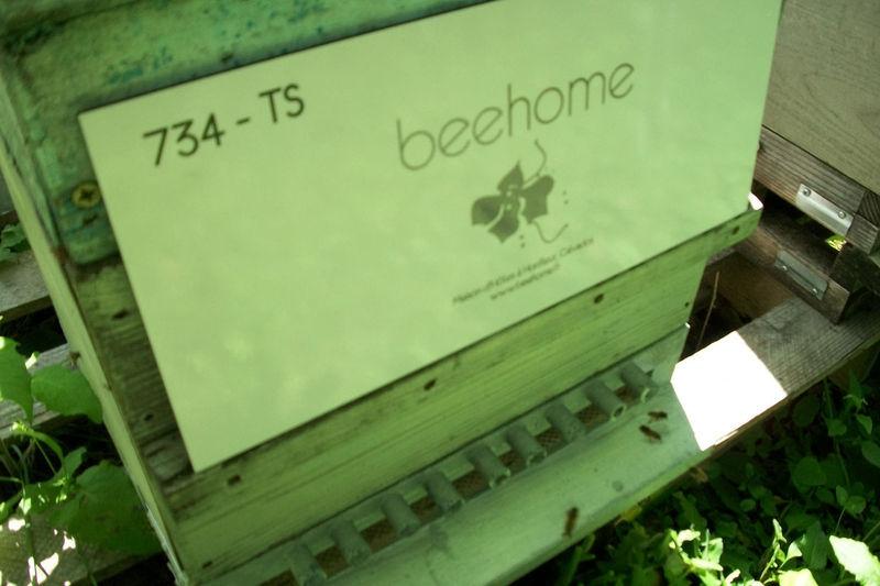 La ruche BEEHOME