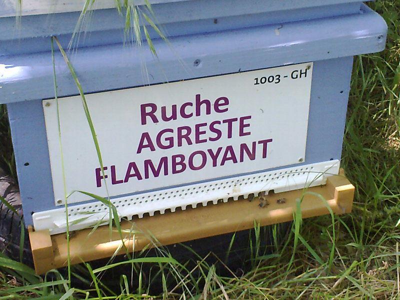 La ruche Agreste flamboyant