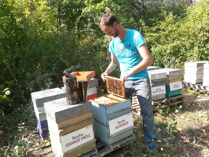 La ruche Alexanor