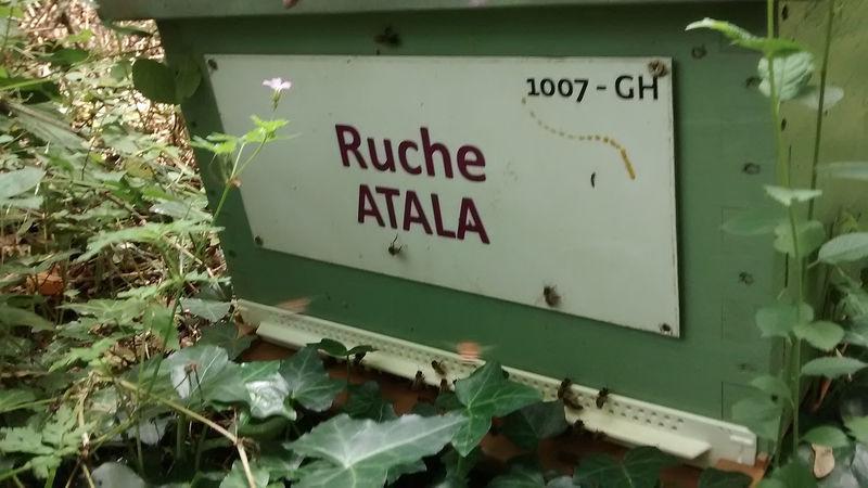 La ruche Atala