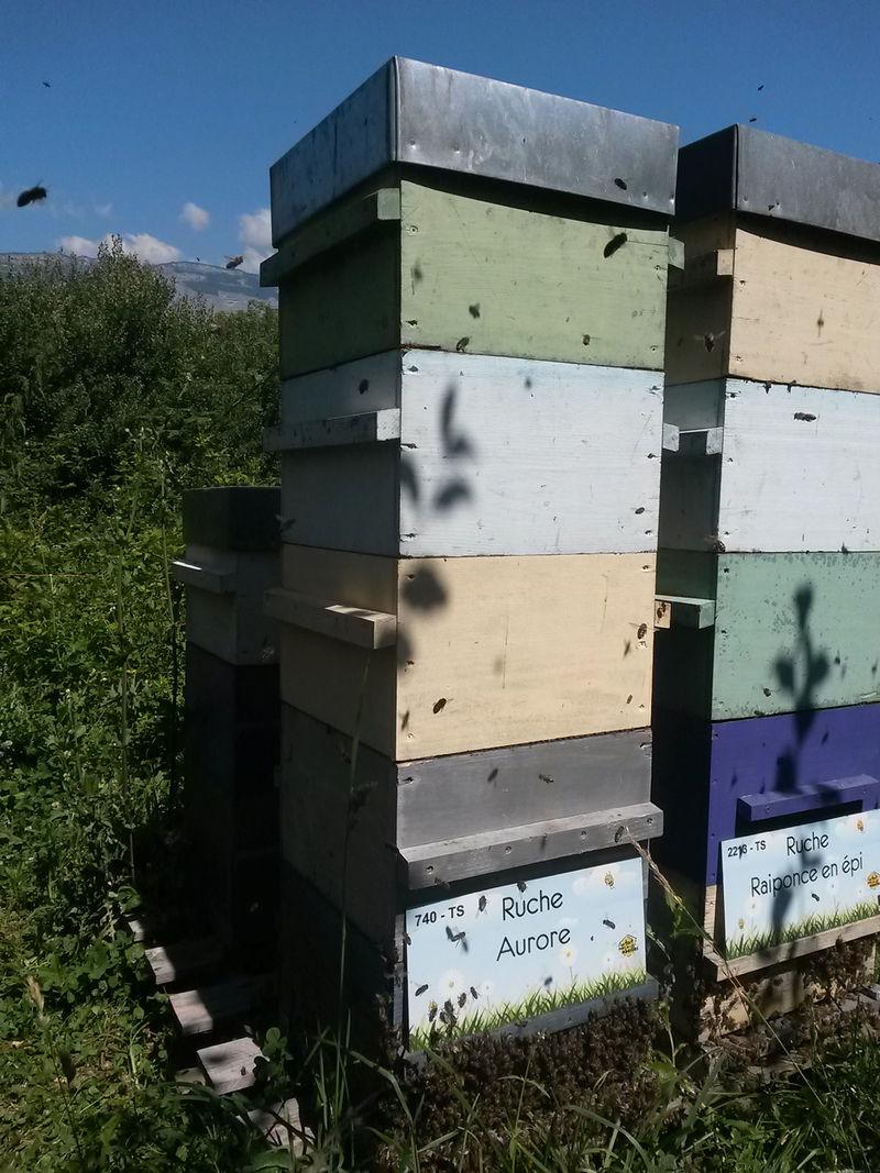 La ruche Aurore