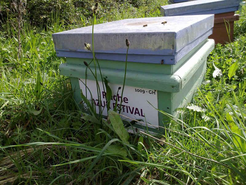 La ruche Azur estival
