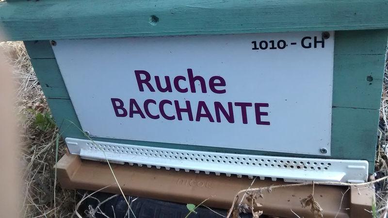 La ruche Bacchante