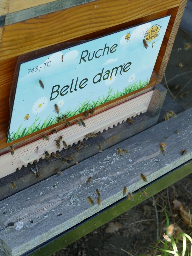 La ruche Belle dame