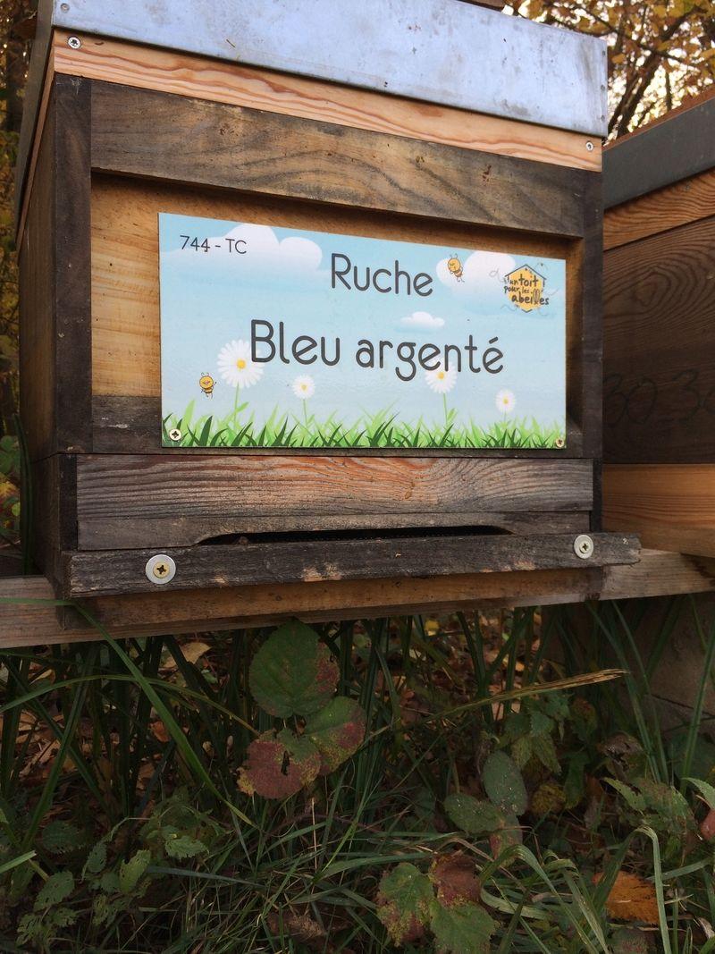 La ruche Bleu argenté