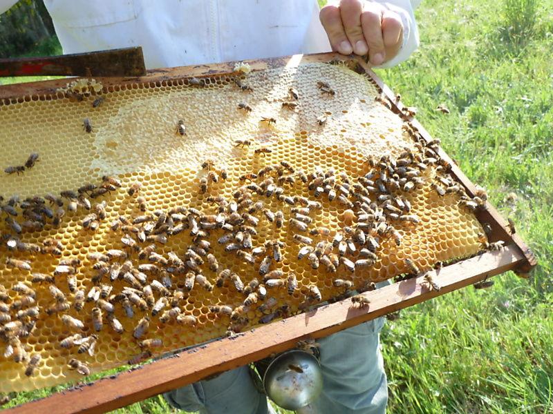 La ruche Bois sec