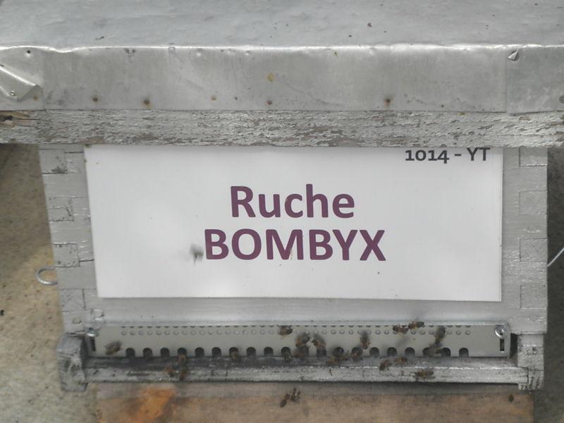La ruche Bombyx