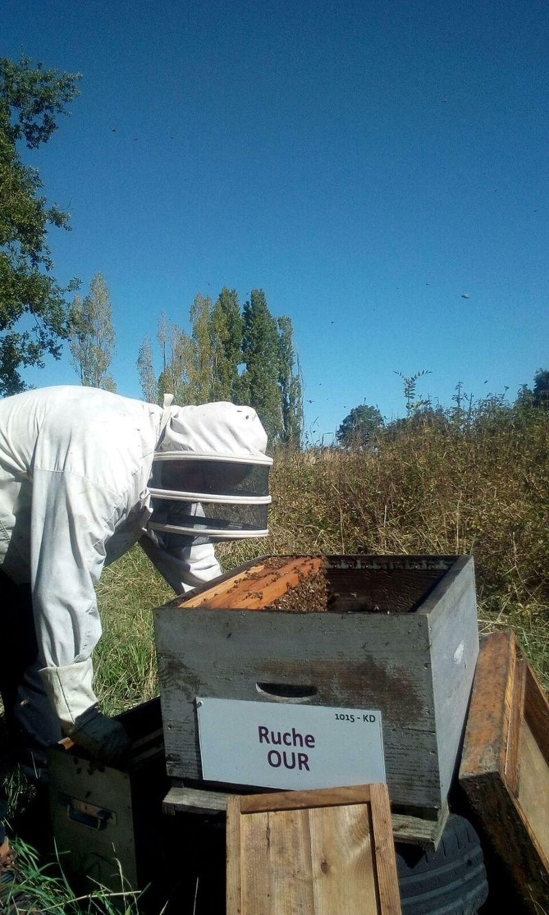 La ruche Ruche Our