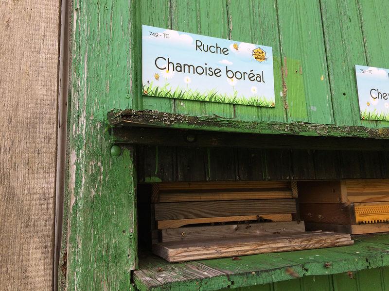 La ruche Chamoise boréal