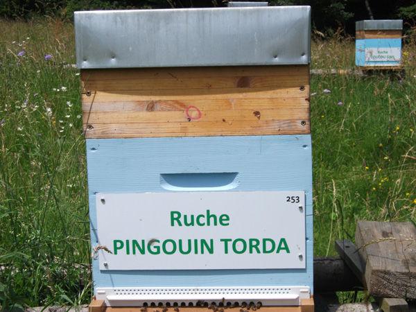 La ruche Pingouin torda