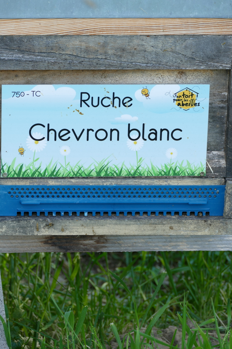 La ruche Chevron blanc