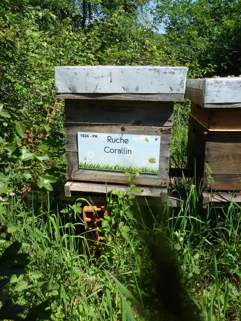 La ruche Corallin